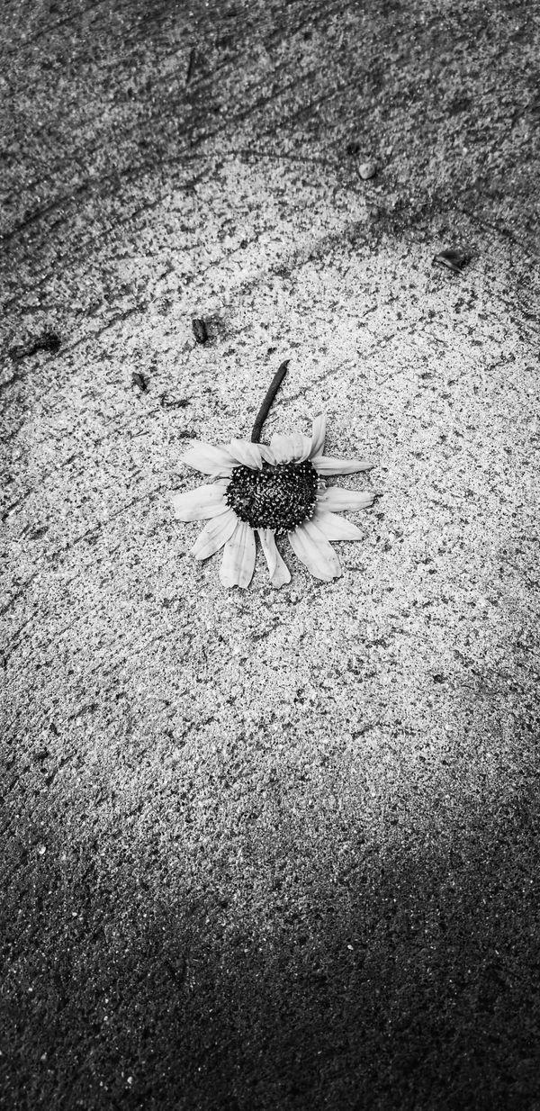 Concrete flower thumbnail