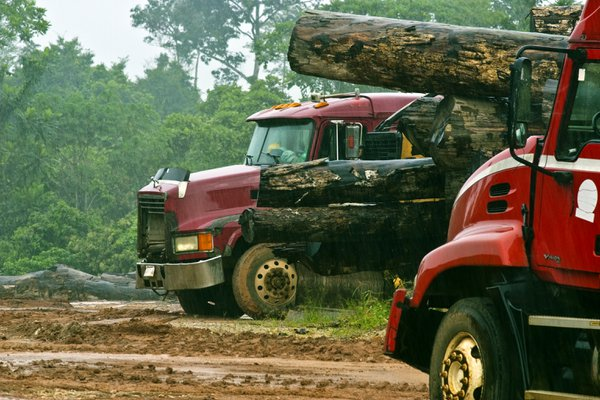deforestation thumbnail
