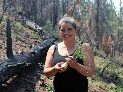 """Carolyn Smith collecting beargrass in Klamath National Forest, 2015. For beargrass to be supple enough for weavers to use in their baskets, it needs to be burned annually. Ideally, it is burned in an intentionally set cultural fire, where only the tops are burned, leaving the roots intact. Prescribed fires in the Klamath National Forest are few and far between, so weavers """"follow the smoke"""" and gather, when they can, after wildfires sweep through the landscape."""