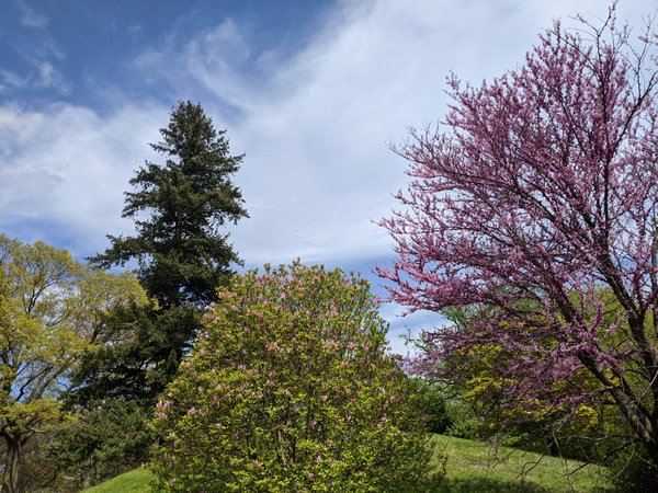 Cherry blossoms and trees on a hill under a cloudy Brooklyn sky. thumbnail
