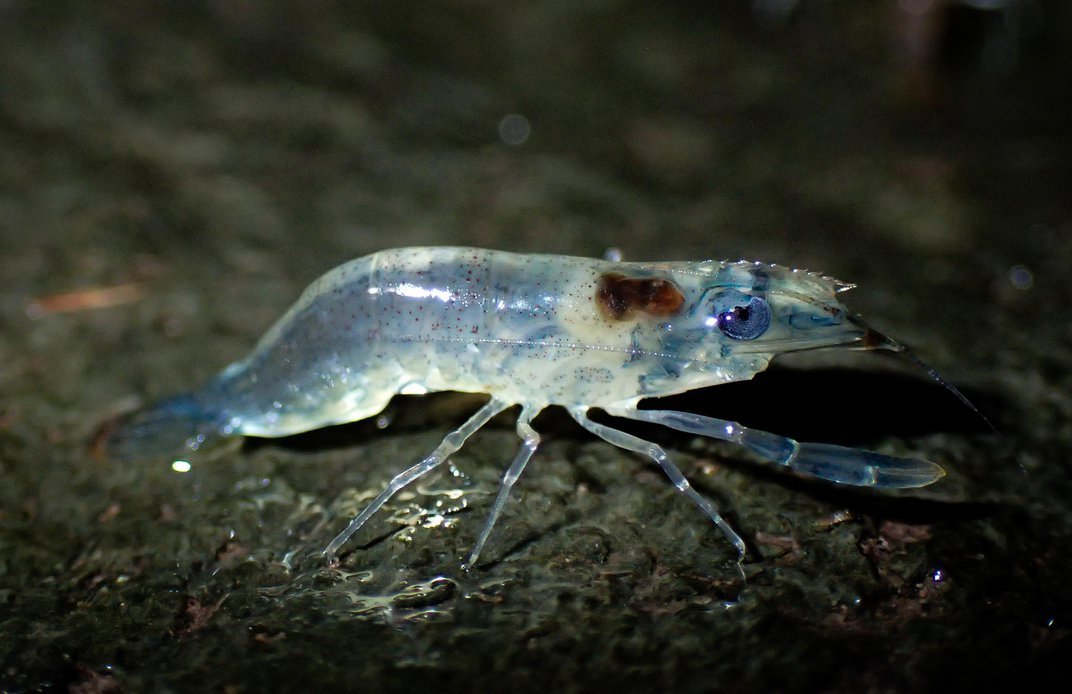 The Science Behind Thailand's Great Shrimp Parade