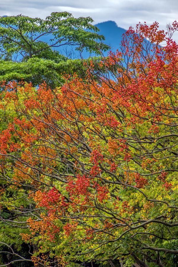 Late Autumn thumbnail