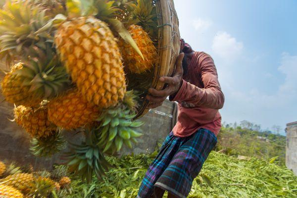 Pineapple's Busily Uploading thumbnail