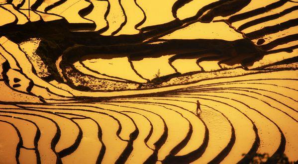 Visit the field at dawn thumbnail