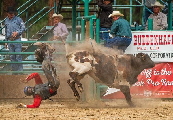 Bull Riding 11 thumbnail