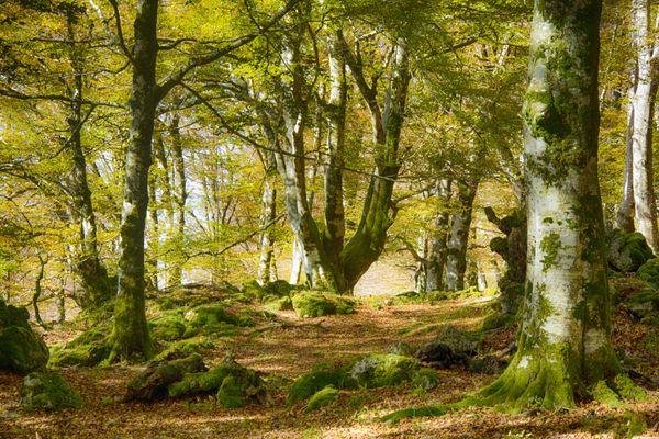 Bosque mutando al otoño  thumbnail