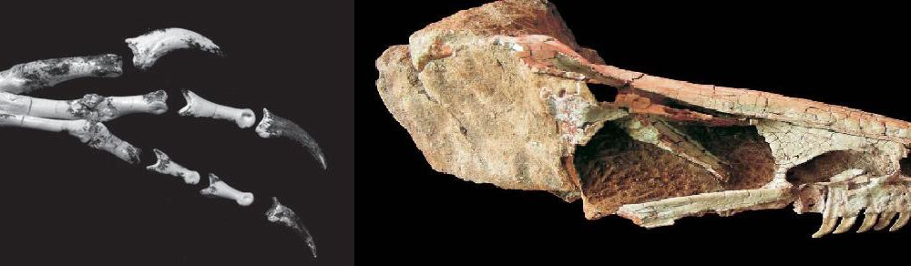 20110520083248dinosaurs-from-asia.jpg