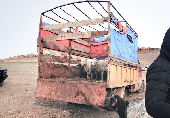 Animal Market thumbnail