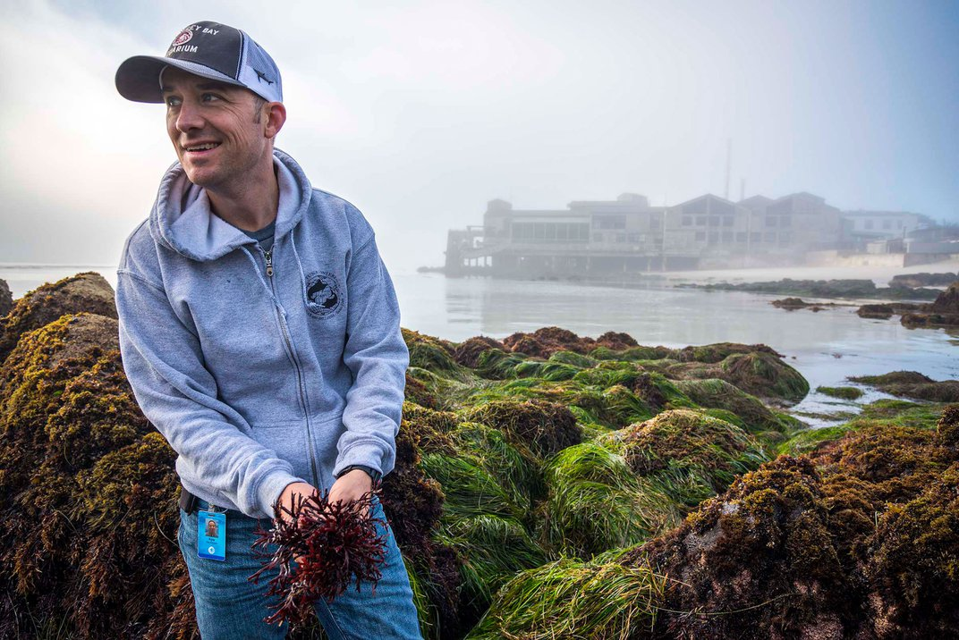 Scientists Use Century-Old Seaweed to Solve a Marine Mystery