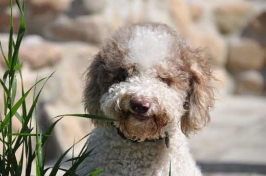 Four Weird Ways Dogs Have Earned Their Keep