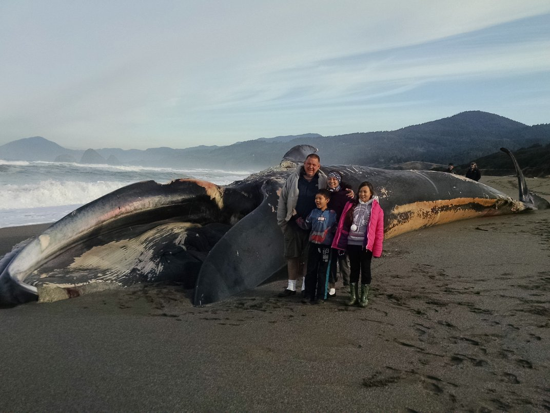 What a Dead Blue Whale Can Teach Us About Life in the Ocean, and About Ourselves