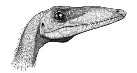 The head of Coelophysis - a close relative of Camposaurus - as restored by John Conway