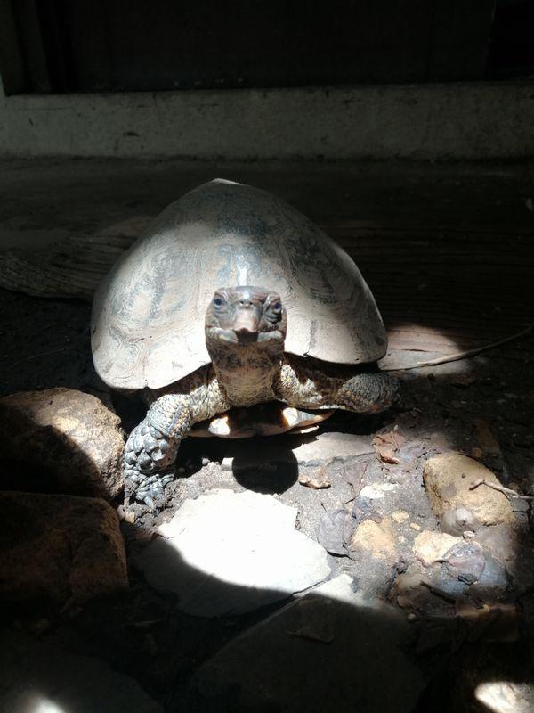 """Rosita's Sunbath in beautiful morning thumbnail"
