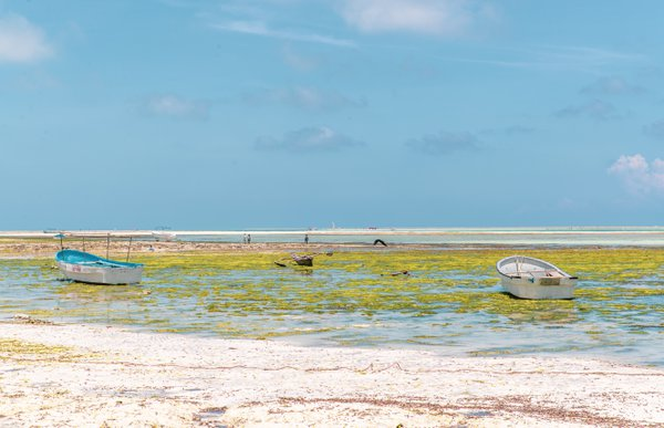The tide is out on the Indian Ocean off of the African coast thumbnail