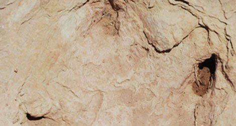 Copper Ridge theropod tracks