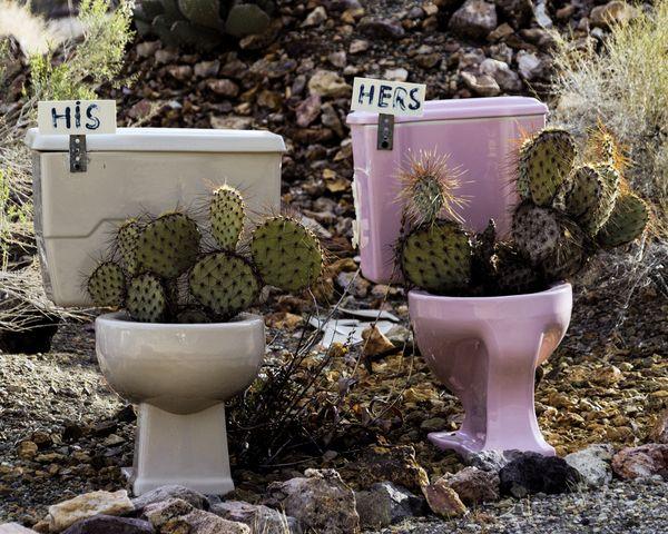 Cactus Bath thumbnail
