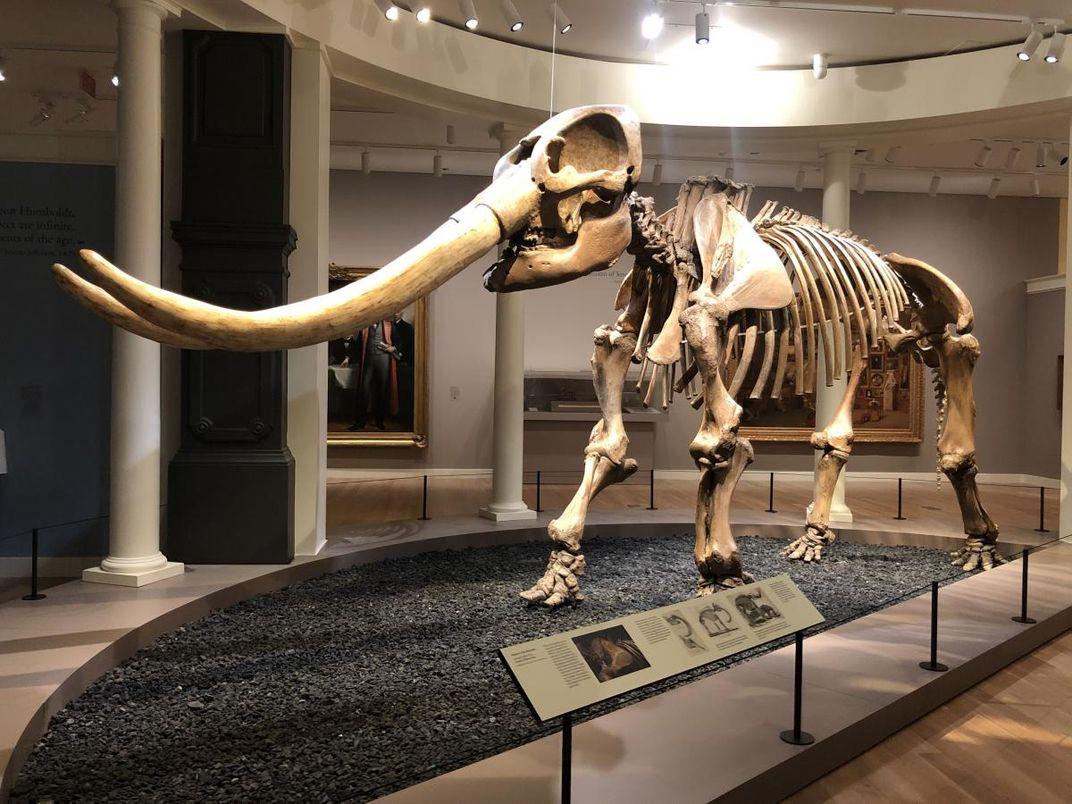 A photograph of a mastodon inside a museum