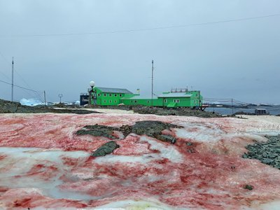 So-called 'watermelon snow' sounds better than it looks and tastes; do not eat pink snow.