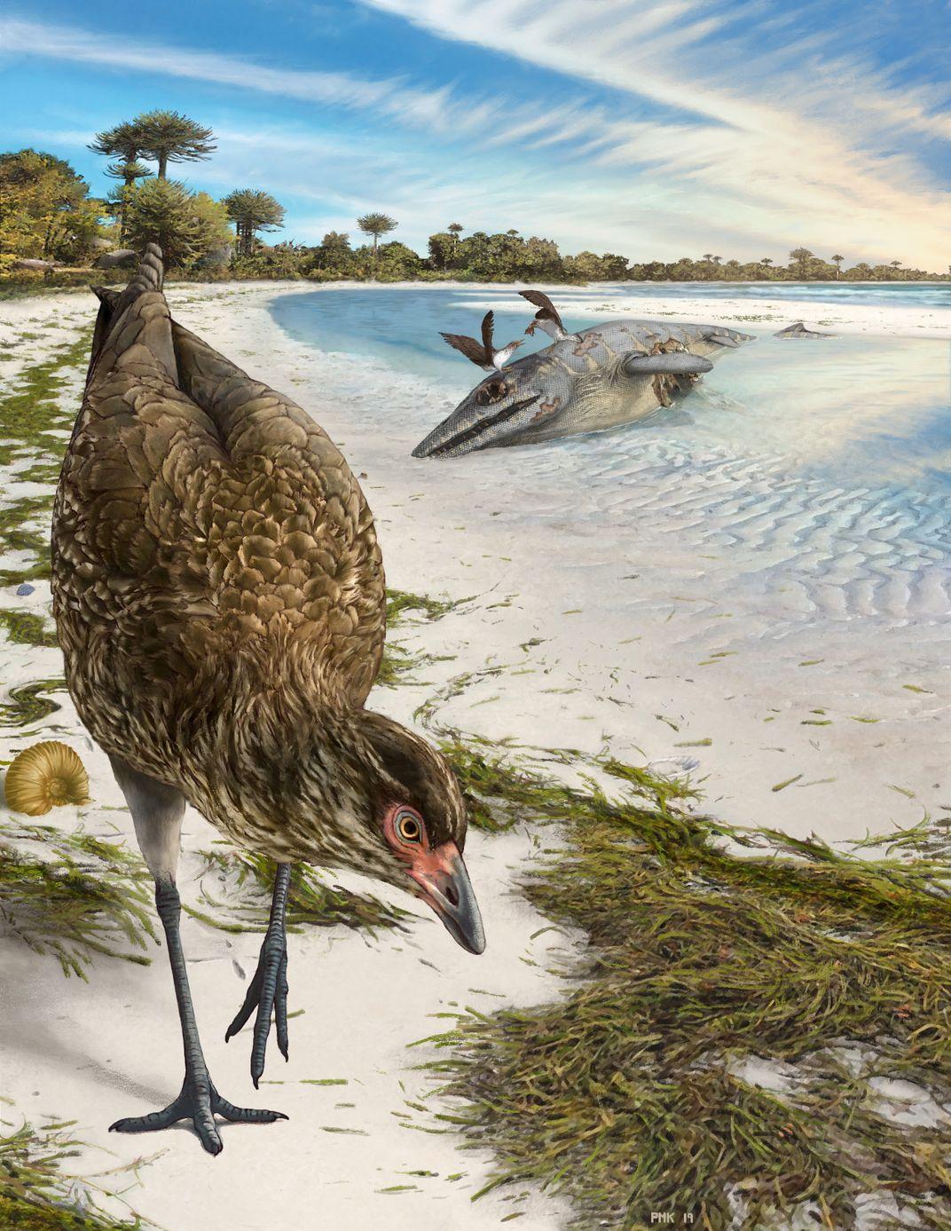 At 67 Million Years Old, Oldest Modern Bird Ever Found Is Natural 'Turducken'
