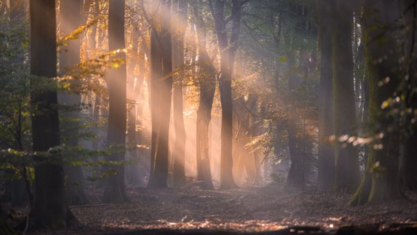 Sun rays in the forest thumbnail