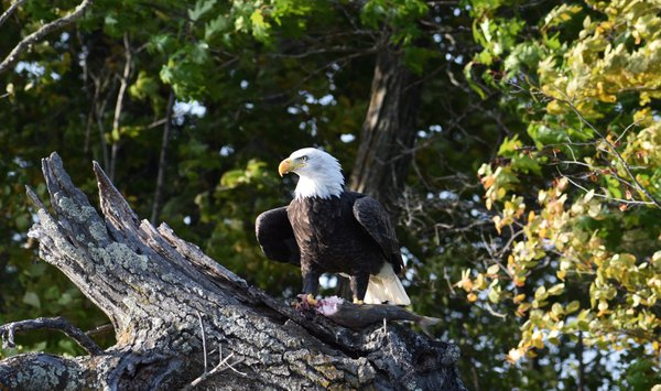 Eagle dining out thumbnail