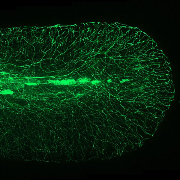 Intriguing Science Art From the University of Wisconsin