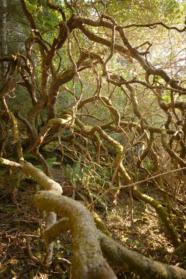 Twisted limbs of a tree with warm sunlight thumbnail