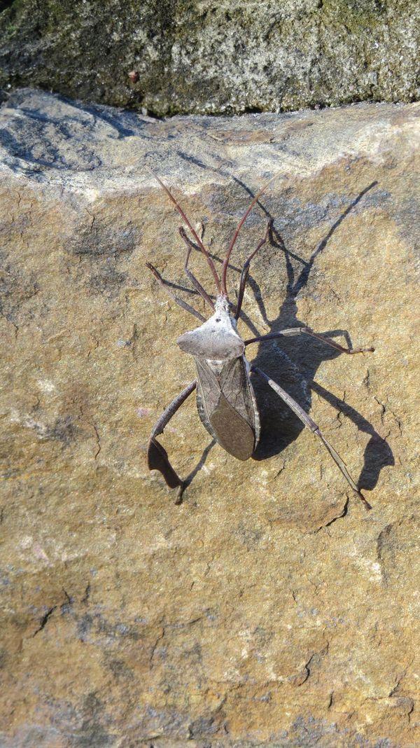 The bug thumbnail