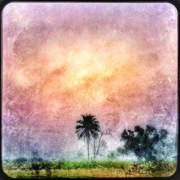 Sun over Palm Tree thumbnail