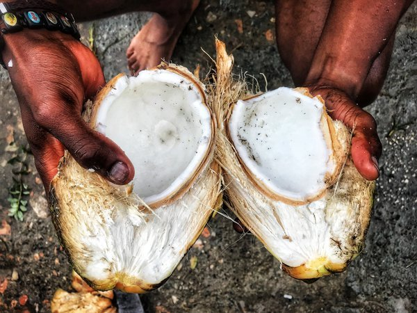 Coconut thumbnail