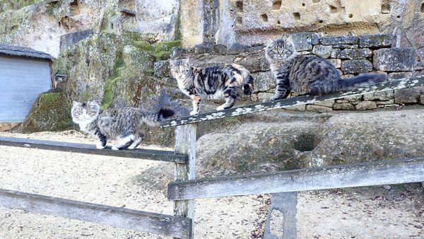 Three cats thumbnail
