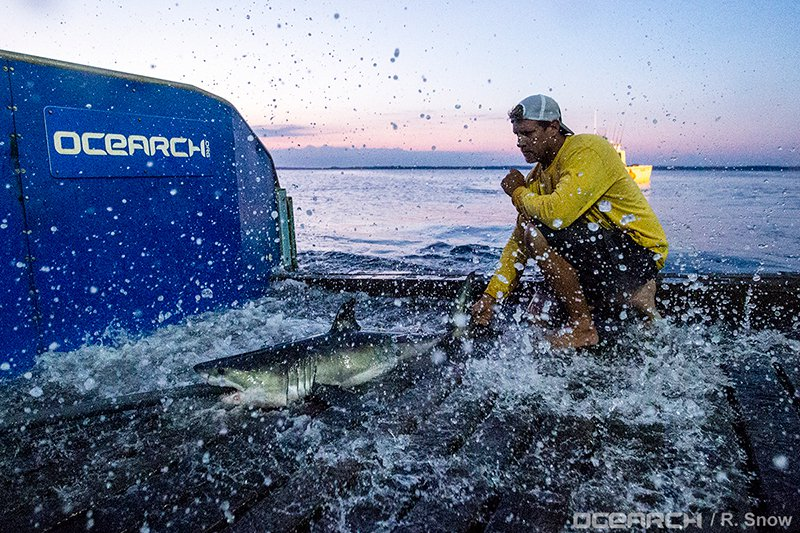 Can Social Media Give Sharks a Better Reputation?