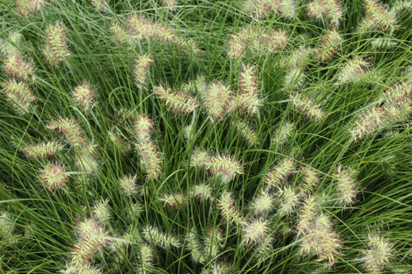 Wild grass thumbnail