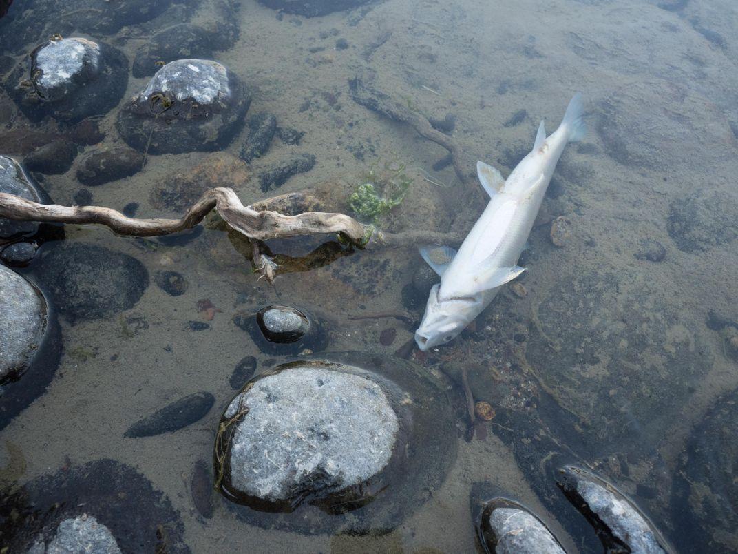 The Massive Yellowstone Fish Die-Off: A Glimpse Into Our Climate Future?