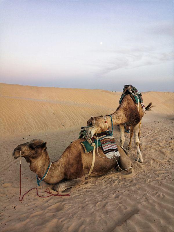 Rest in the desert thumbnail