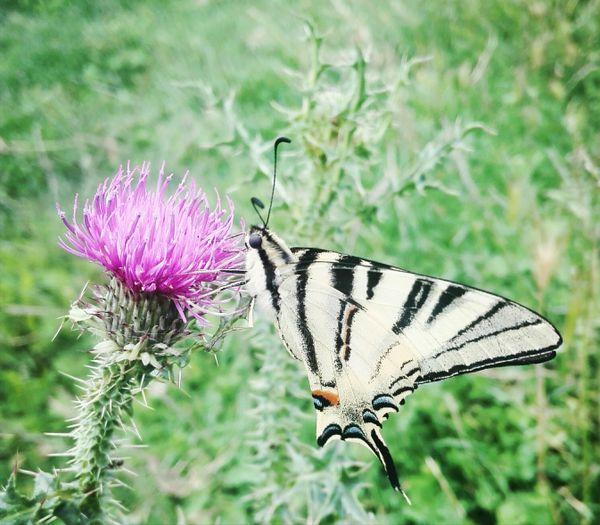 Butterfly thumbnail