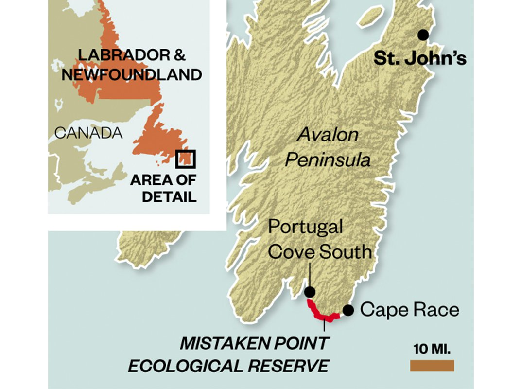 Darwin Would Have Loved the Cliffs of Newfoundland, Where 500-Million-Years-Old Fossils Reside