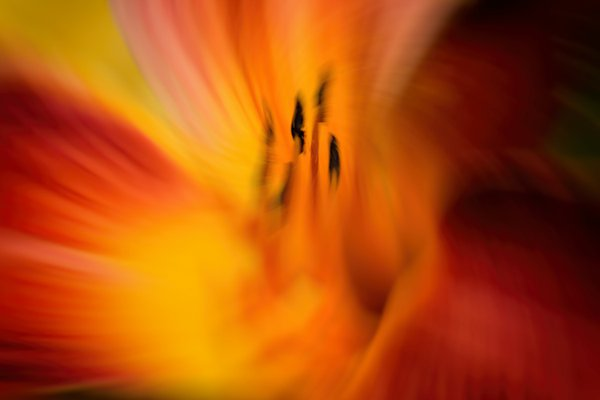 Floral flames. thumbnail