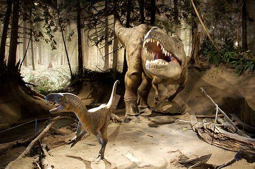 20110520083302albertosaurus-dromaeosaur.jpg