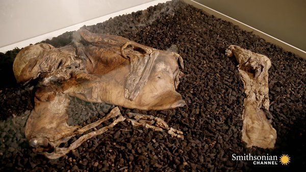 Preview thumbnail for The Stunningly Clear Features on the Lindow Man Mummy