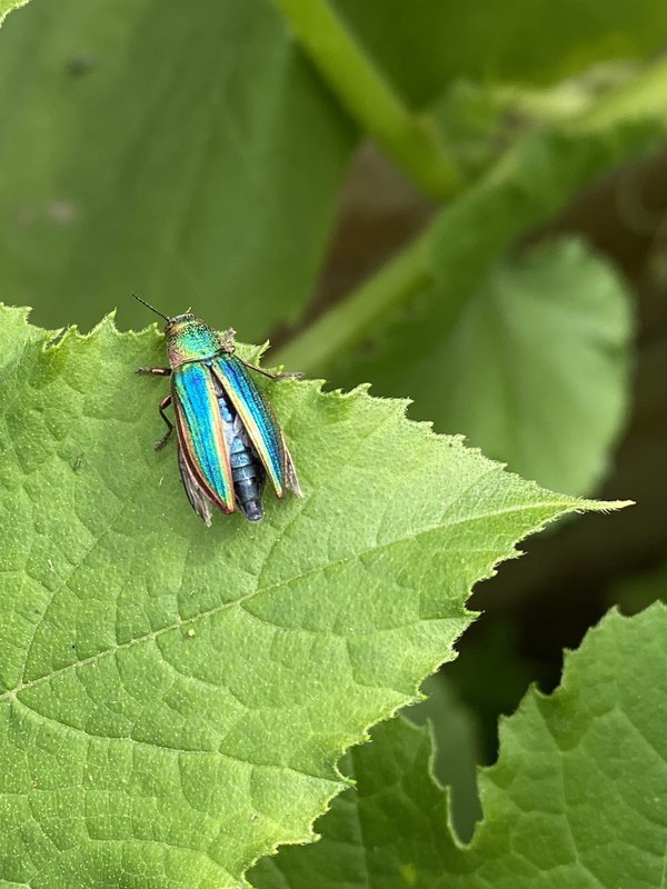 Rainbow bug thumbnail