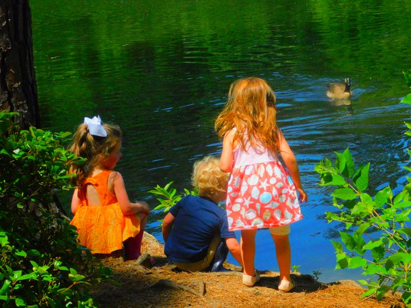 Children feeding geese at local gardens.  thumbnail