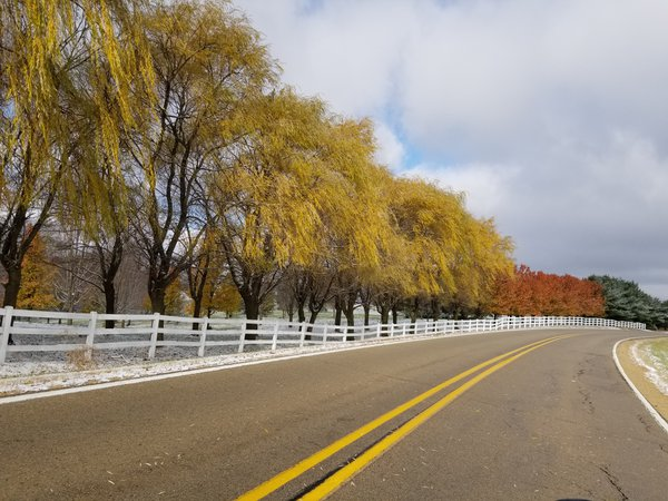 A line of trees along a curve of a road, with their colors still in Late Fall thumbnail