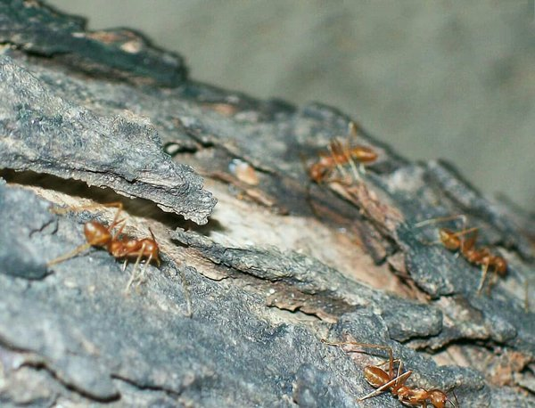 Ants climbing a tree thumbnail