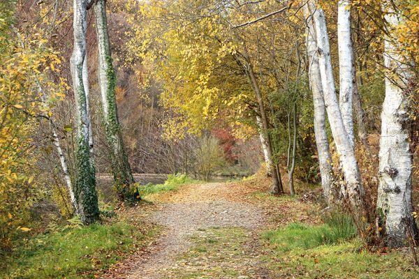 Autumn path thumbnail