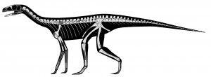 20110520083211Silesaur-outline-1-300x110.jpg