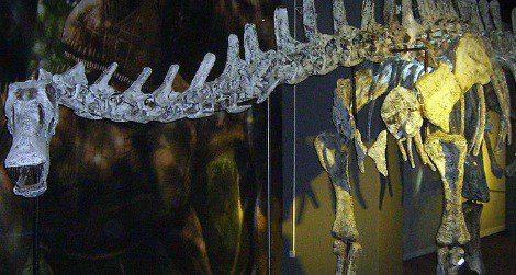 The rebbachisaurid Limaysaurus