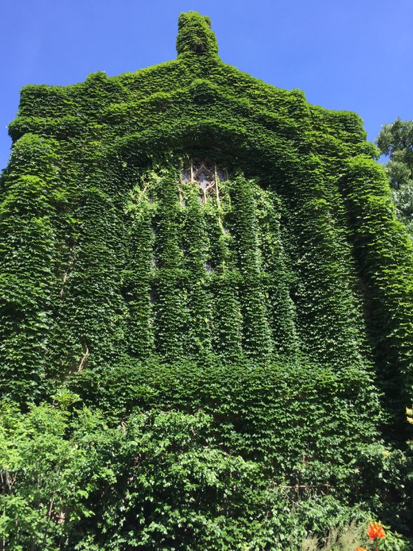Ivy-covered Bond Chapel at the University of Chicago thumbnail