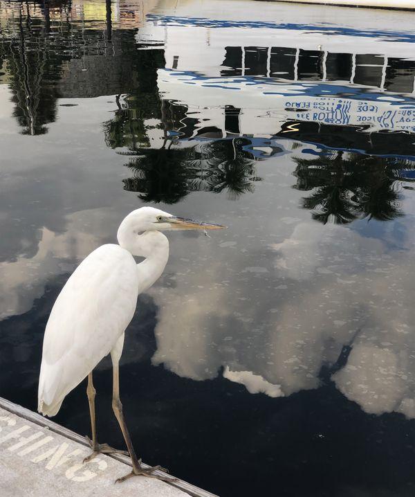 Crane Fishing thumbnail