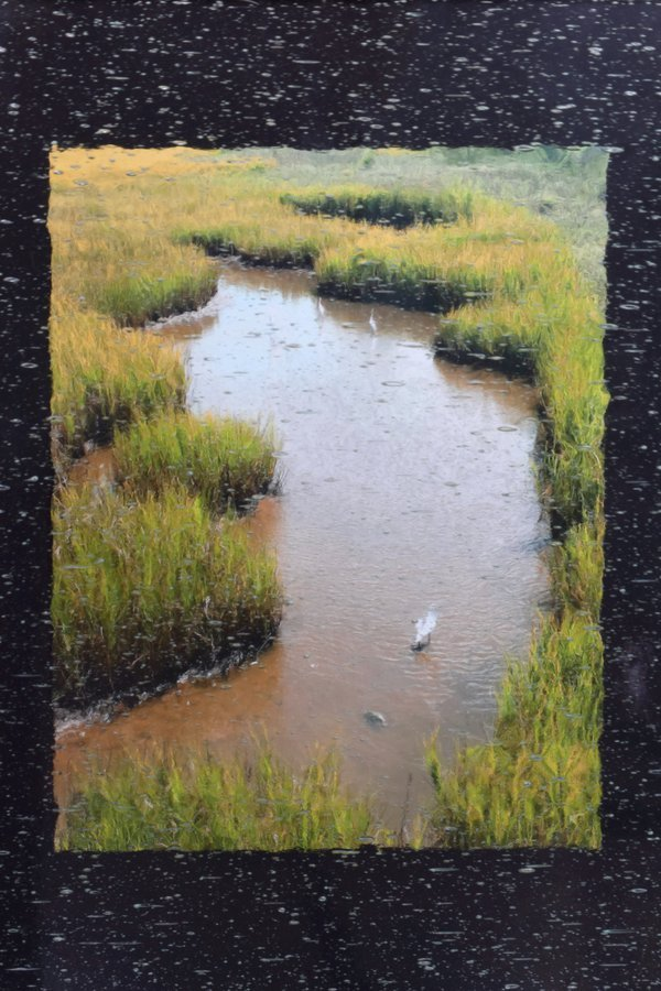 Herons in Marsh Grass thumbnail